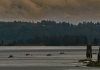 FCRCC Ft. Langley River Run